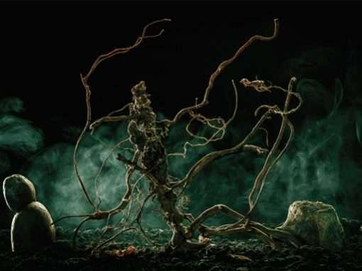 The Archaea: Stephanie Rushton