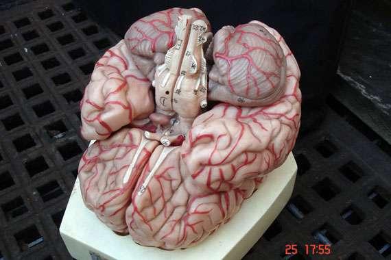 mind_1